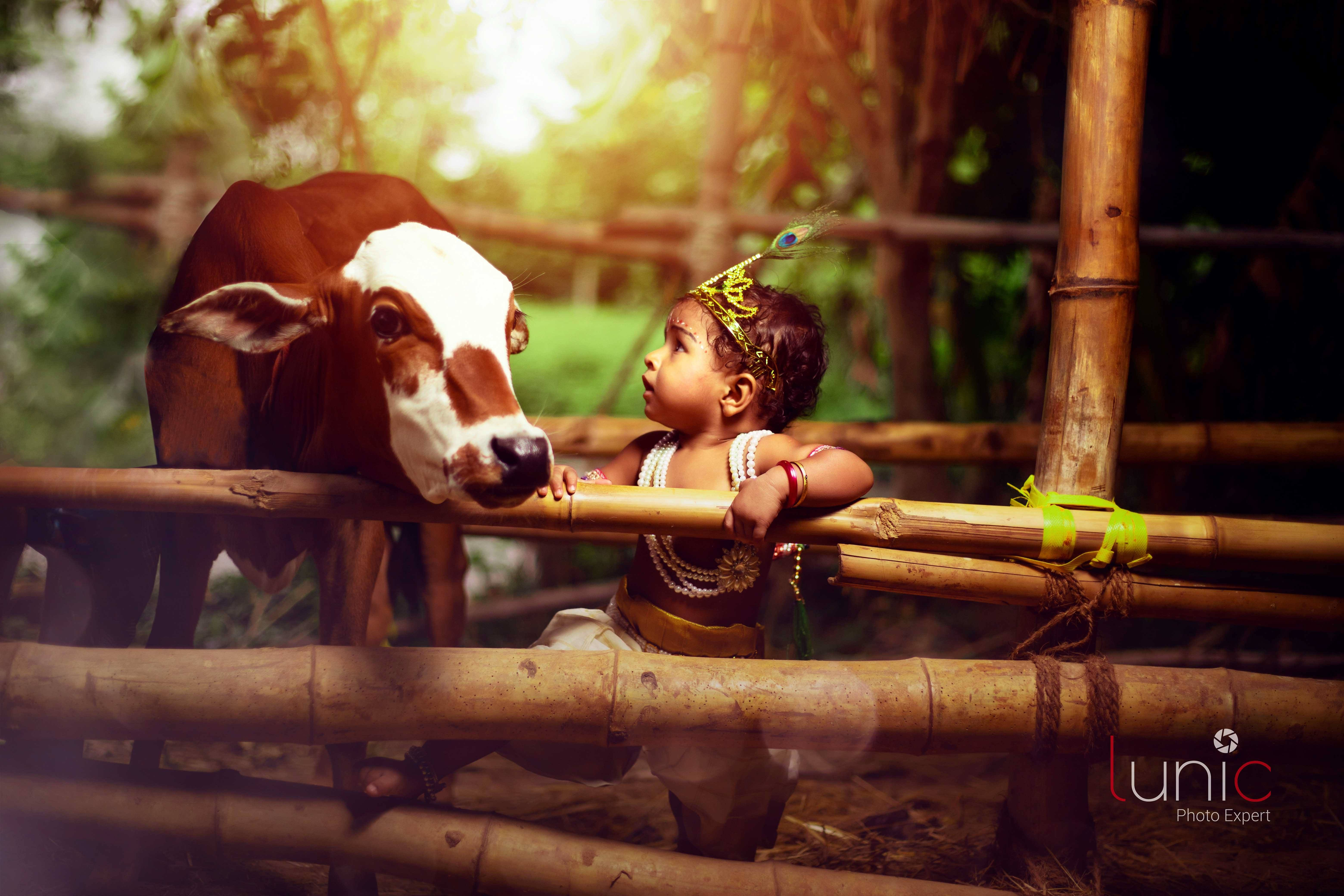 Baby Krishna near cow